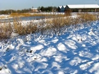 Borsbeek sneeuw